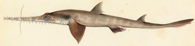 Arbeitgeber-Haie in Hamburg