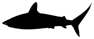 Shark_silhouette_Amanda44_320px